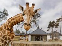 Bester Newcomer-Ferienpark in den Niederlanden